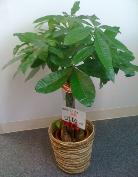 cotoba-tree01